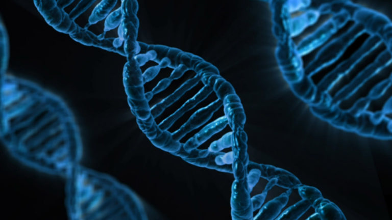訂製完美 基因工程